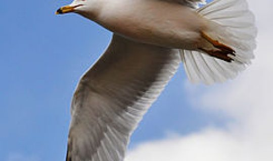 The Gulls Review Hour