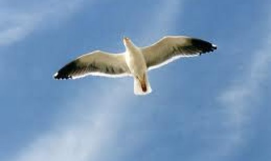 The Gulls Asylum Seeker Special