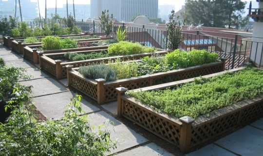 Edible Urban Gardens