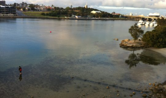 Understorey: Holding Back the Climate Tide