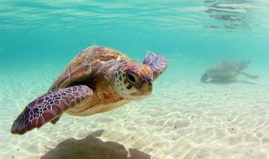 Coalition Suspends Marine Sanctuaries
