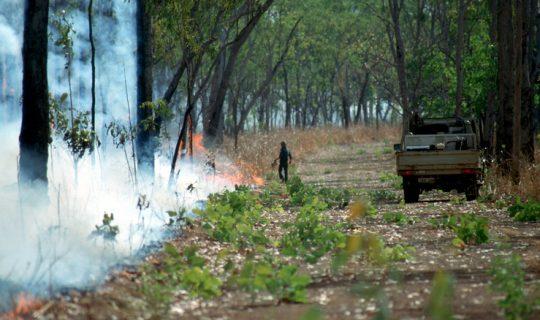 Road Trip Stories: Bushfire Walking