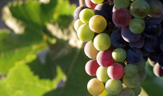 The Food Alternative # 31: Summer Wine