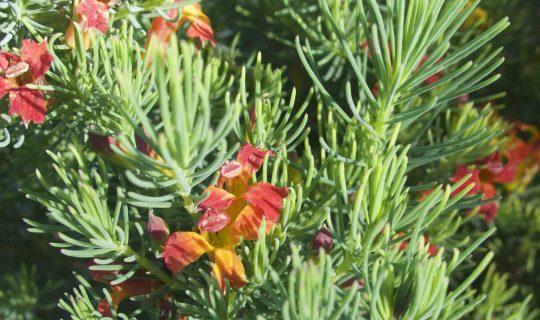 Understorey: Mary Gray's Ecology