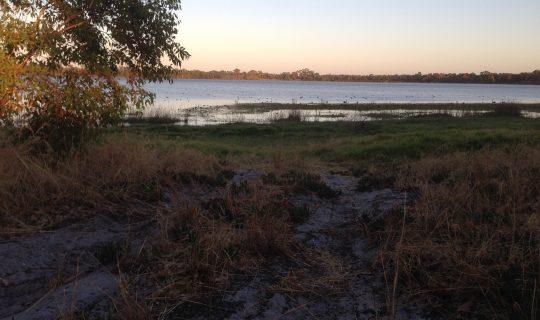 Understorey: Digging Deeper than 20cm
