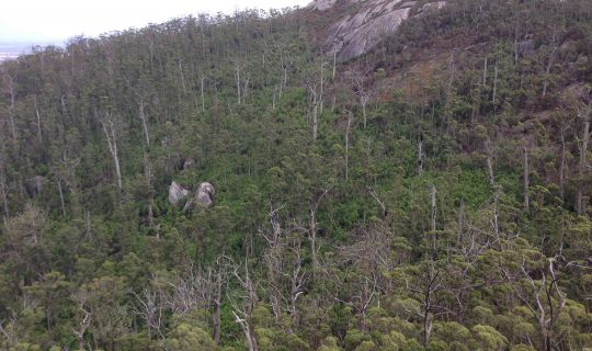Understorey: Look Again, and More Closely