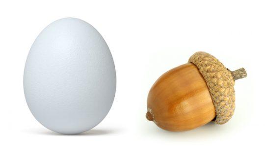 Talk the Talk: Eggcorns
