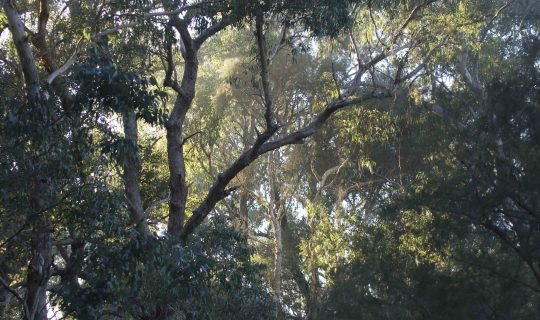 Understorey: Beeliar Voices