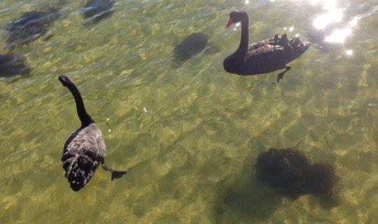 Understorey: Honouring Perth's Precious Wetlands