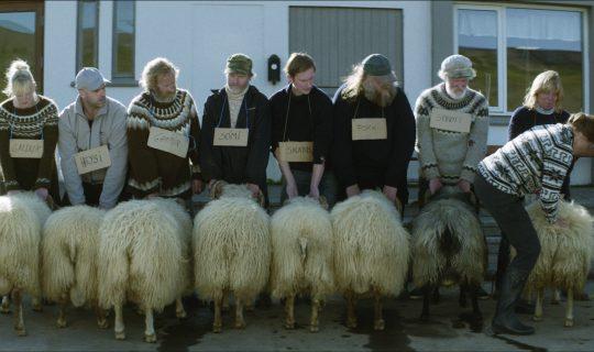 Lotterywest Festival Films: Rams