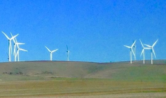 Understorey: Blowing in the Wind