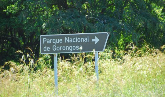 Understorey: Gorongosa Back from the Brink