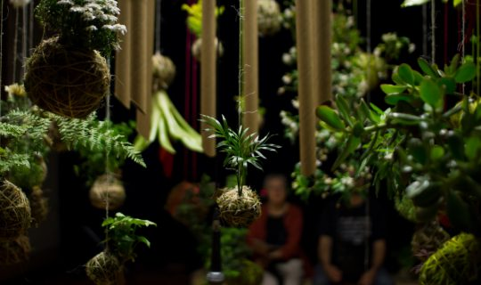 Squad Goals: Kokedama & Botanical Craft