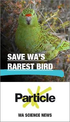 MK1413 - RTR FM web banners - bird portrait