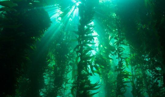 Study Aims To Explore Deep Sea Secrets
