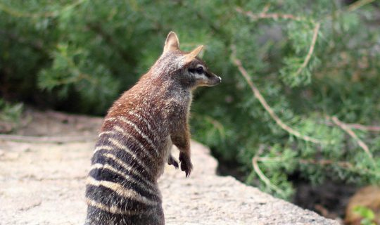 Damn The Man, Save The Numbat