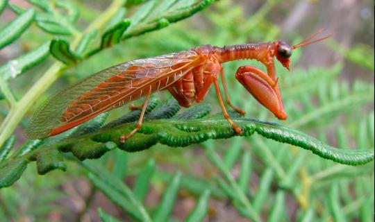 Understorey: Not Just Bugs
