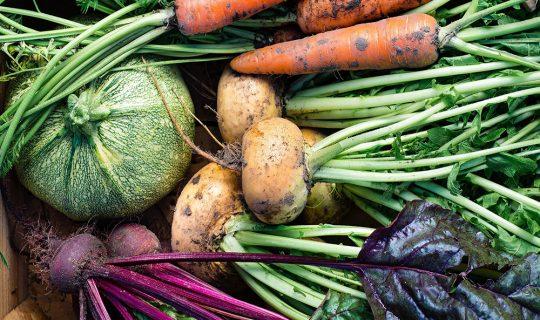 DIG! A bunch of SOUPer winter veggies