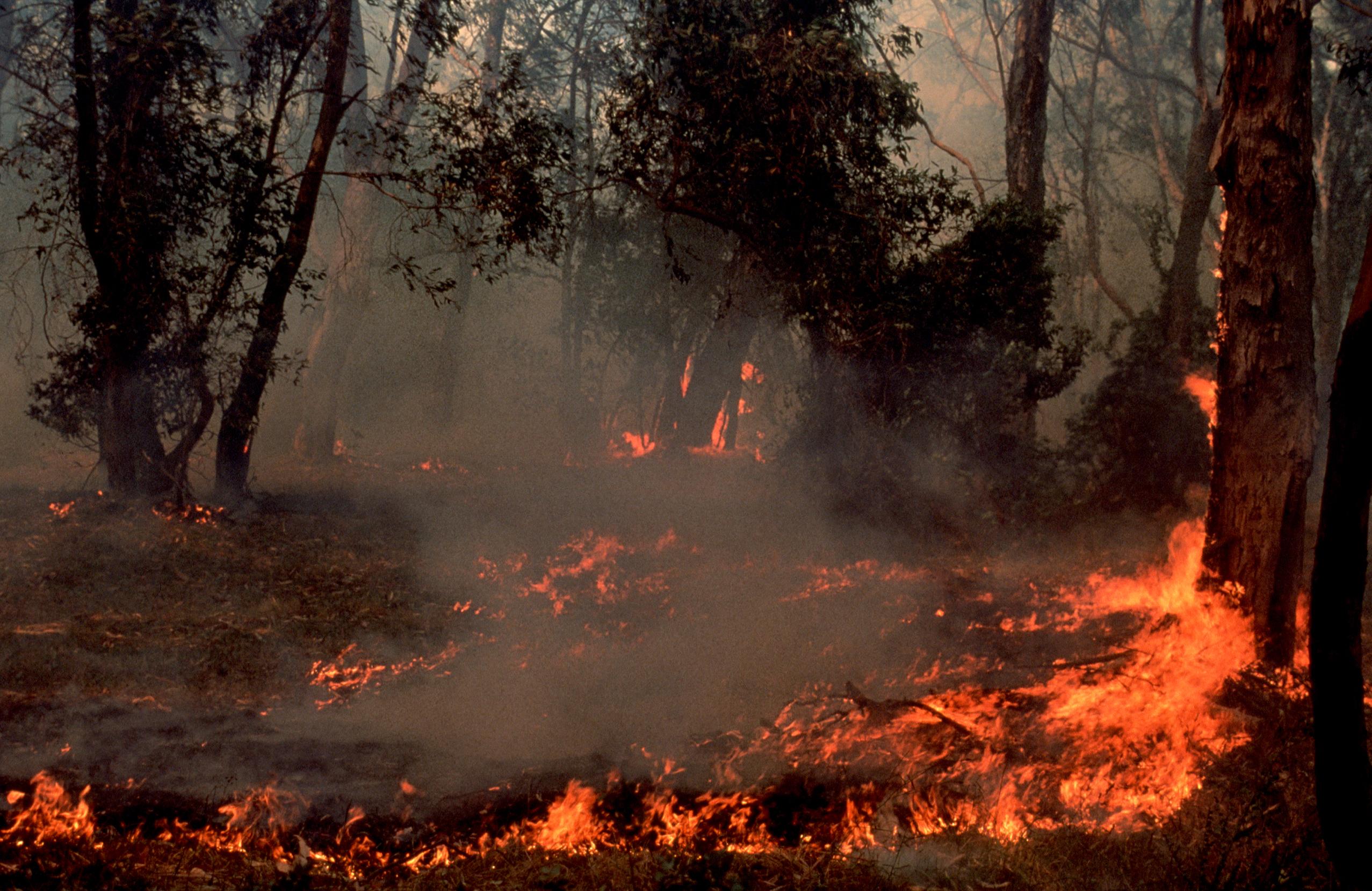 bushfire - photo #18