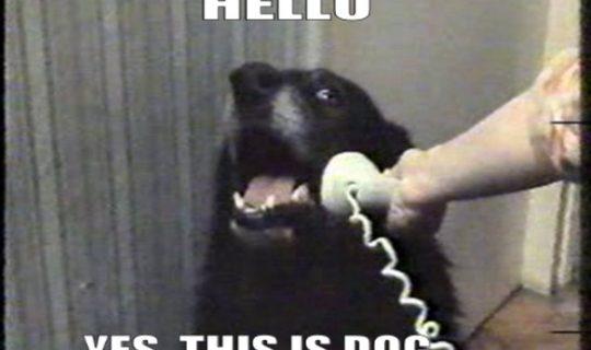 Talk the Talk: Pet Translator