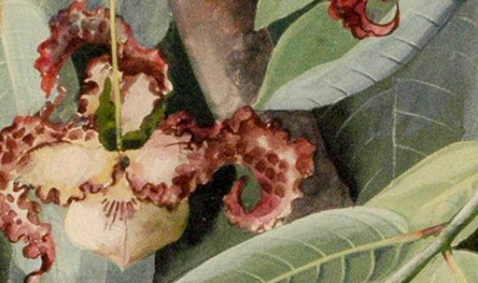 Exhibition with a Focus on Flora
