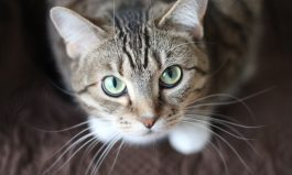 Feline Good – Cat Care