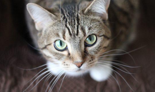 Feline Good – Cat Care