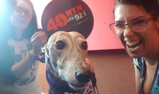 Greyhound Adoptions W.A.