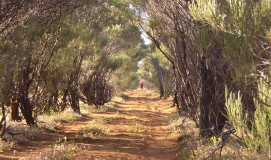 Understorey: Rangelands of WA