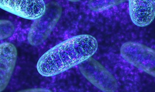 The Powerhouse of The Cell: Mitochondria