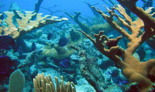 Ocean Reef Marina Development