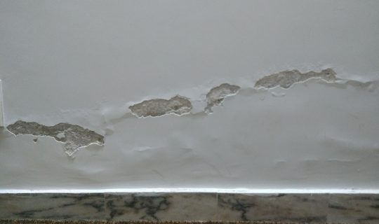 FITTER | HAPPIER: Mould and Damp