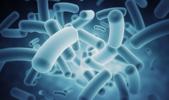The Microbiome of the Gut