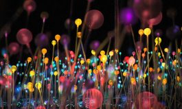 Bruce Munro's Creation – a 'Field of Light'