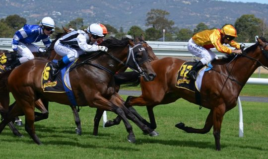 Melbourne Cup – Coalition for the Protection of Race Horses