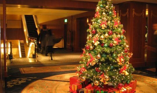 Christmas Trees and Biophilia