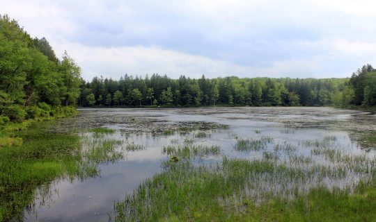 Wetlands Becoming Carbon Scrubbing Hotspots?