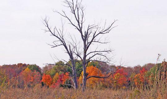 Dead Tree Detectives