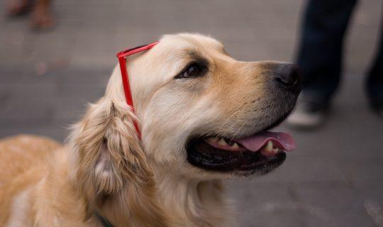 Dogs: Man's Best Stress Confidant?