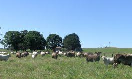 On-Farm Experimentation
