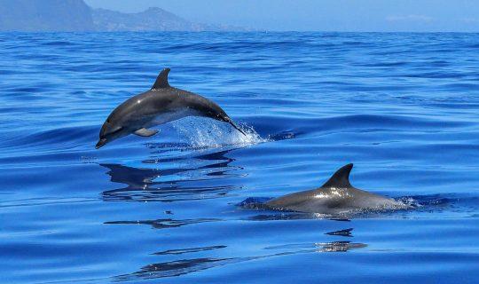 Canada's Cetacean Breeding Ceasing