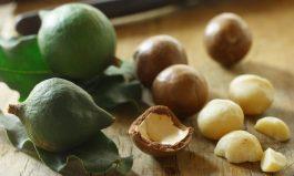 Macadamia nuts originating in QLD
