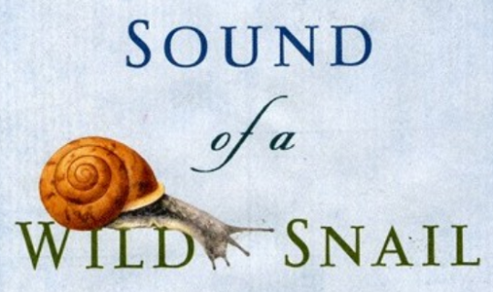RTR goes Snail-Pace for 'The Sound Of A Wild Snail Eating'