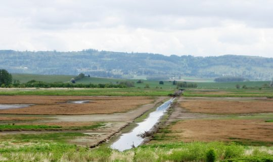 Southern Forest Irrigation Scheme