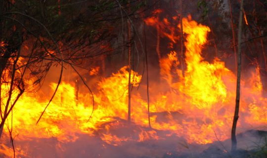 Bushfires and Their Danger to Asthmatics