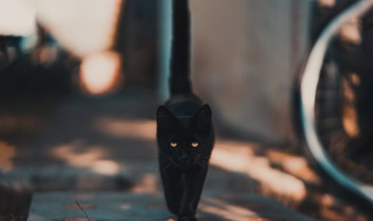 The Science Behind Superstition