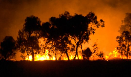 Kangaroo Island Fire Aftermath