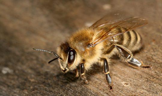 Australian Meeting of Junior Beekeepers