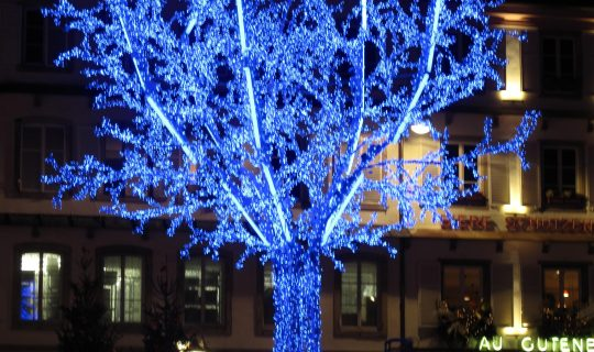 The Blue Tree Project