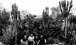 King Brown's Cactus